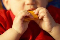 Little boy eating cracker.jpg