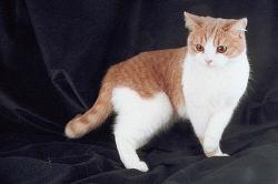 Pedigree Cats 0023.jpg
