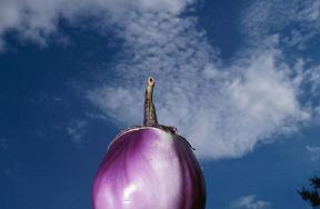 Eggplant uid 1040404.jpg