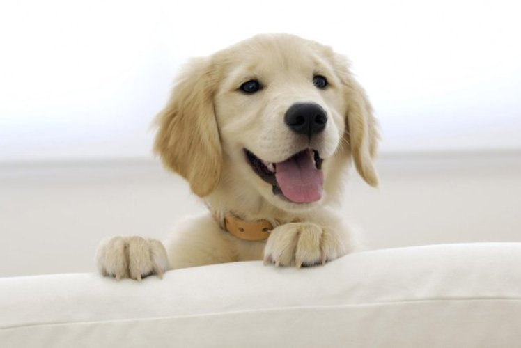 images_24_happy_dog.jpg.670x0_q85_crop-smart_upscale.jpg