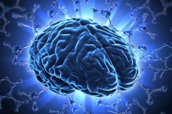 images_human_brain.jpg