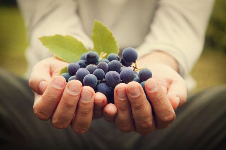 images_30_bigstock-Grapes-Harvest-51222910-730x486.jpg
