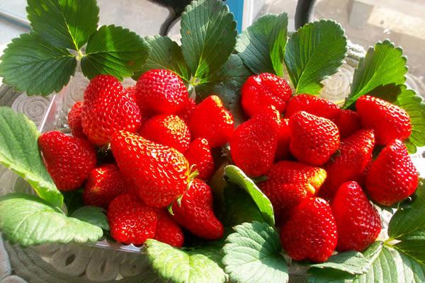 images_0aaaaaaa3fruits.jpg