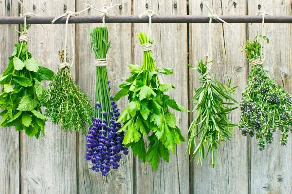images_16122016_σεμινάριο-αρωματικά-φυτά-βότανα.jpg