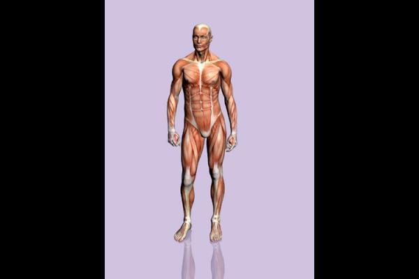 images_212017_Human-body-wallpaper.jpg