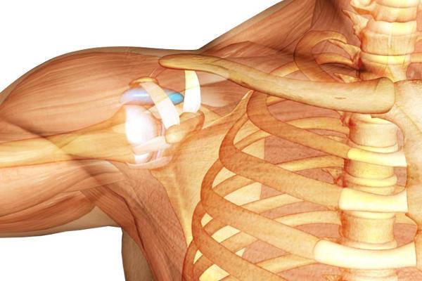 images_1622017_shoulder-anatomy.jpg