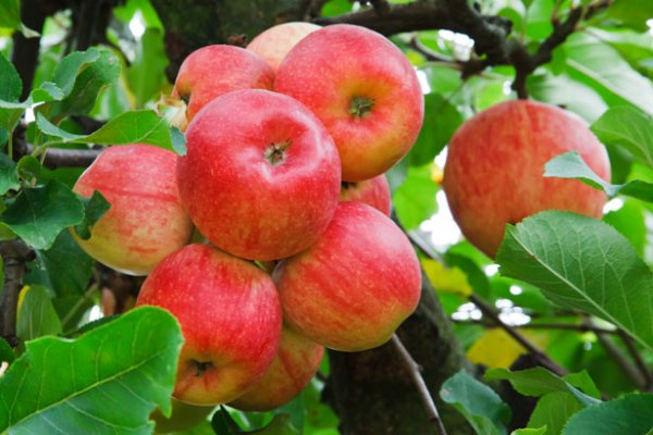 images_222017_2_apples2.jpg