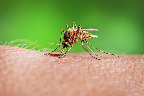 images_2332017_2_Simple-Ways-To-Identify-A-Mosquito-Main.jpg