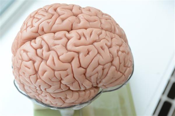 images_2832017_2_british-university-attempting-3d-print-neural-networks-brain-using-human-stem-cells-1.jpg