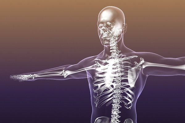 images_332017_human-skeleton-bones-3d-model-free-.jpg
