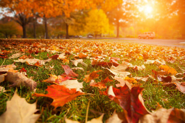 images_2782017_Autumn-leaves.jpg